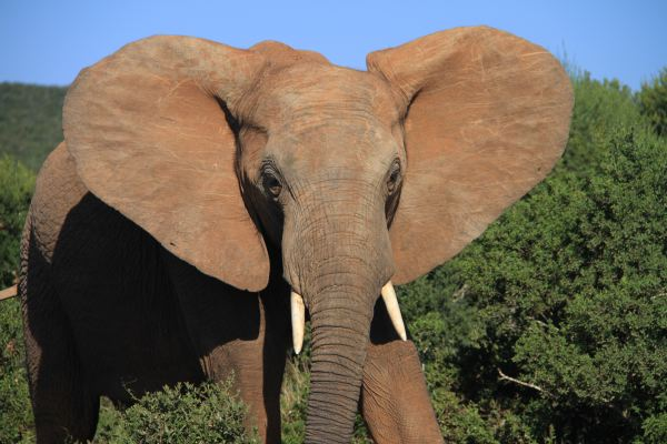 Tröten macht Spaß Elefanten Figur Familie Deko Afrika